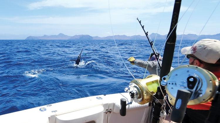 Deep Sea Fishing for Mahi Mahi