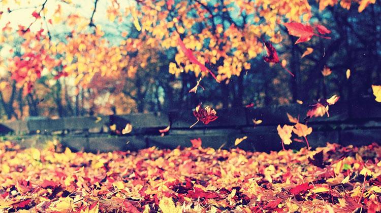 """Sip & Paint """"Autumn Leaves"""""""